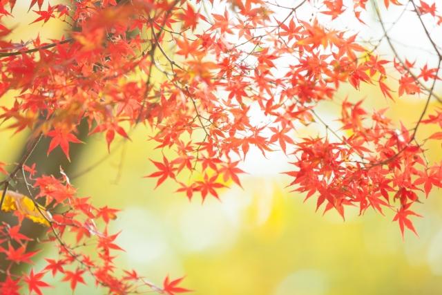 【2018】 秋の展示会情報